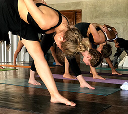 yoga training ashtanga vinyasa